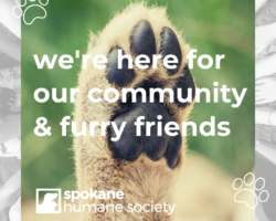 shelter updates 4.6.20 | from our SHS family to yours