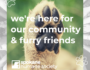 shelter updates 5.27.20 | from our SHS family to yours