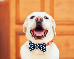 dear, landlords… let the doggone puppers in!