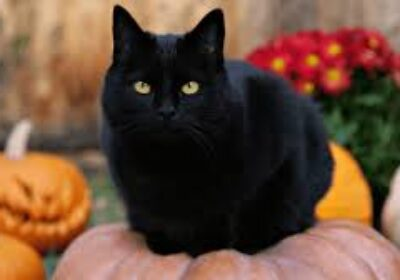 the truth about black cats & halloween