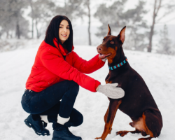Winter Weather Pet Tips
