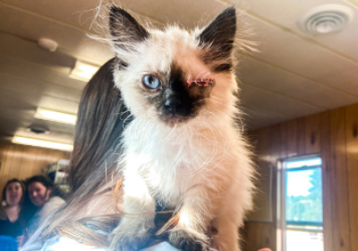 STAR Funds Urgently Needed to Help Ailing Kittens