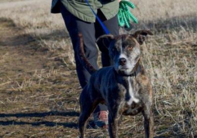 Walking Shelter Dogs By Yvonne Leach